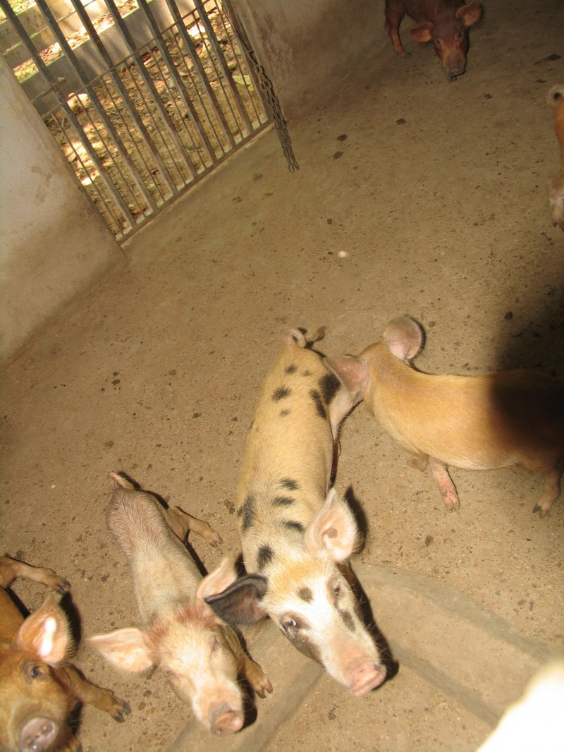 img-breeding-and-agriculture-project-vida-feliz