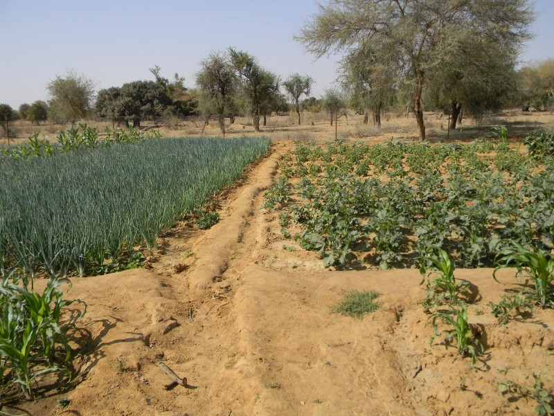 img-development-of-water-resources-for-human-consumption-and-for-agro-zootechnical-production